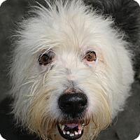 Adopt A Pet :: Bracewell - Bedminster, NJ