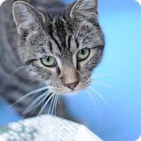Adopt A Pet :: Frances 'Baby' Mouseman - Brooklyn, NY