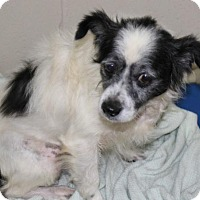 Adopt A Pet :: Jeffery - Hilton Head, SC