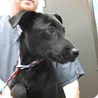Adopt A Pet :: LACY - Tulsa, OK