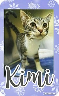 Domestic Shorthair Kitten for adoption in Edwards AFB, California - Kimi