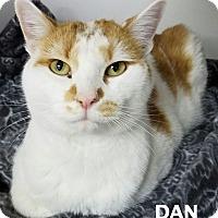 Adopt A Pet :: Dan - Lapeer, MI