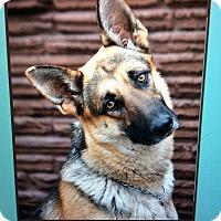 Adopt A Pet :: PENNY VON PENZLIN - Los Angeles, CA