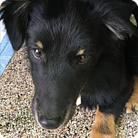 Adopt A Pet :: Wolfgang - Thousand Oaks, CA