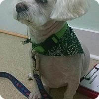 Adopt A Pet :: Toby - Greensboro, MD