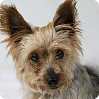 Adopt A Pet :: Darling - Ridgway, CO