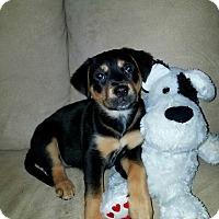 Adopt A Pet :: Melody - Flemington, NJ