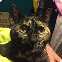 Adopt A Pet :: ADORA - Burlington, NC
