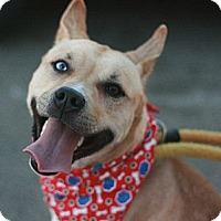 Adopt A Pet :: Chikita - Canoga Park, CA