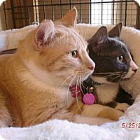 Adopt A Pet :: Howie & Lily - San Luis Obispo, CA