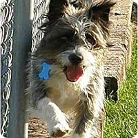 Adopt A Pet :: Buddy - Meridian, ID