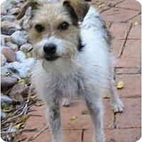 Adopt A Pet :: WILLIE - Phoenix, AZ