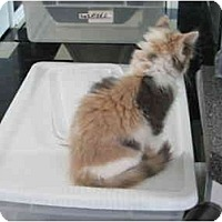 Adopt A Pet :: Peaches - Jeffersonville, IN