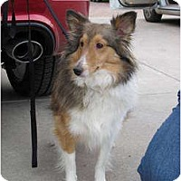 Adopt A Pet :: Bayleigh - apache junction, AZ