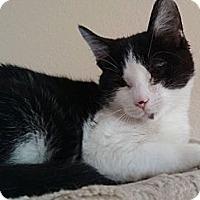 Adopt A Pet :: Leantoo - Davis, CA