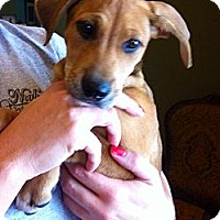 Adopt A Pet :: Addison  *Adopted - Oklahoma City, OK