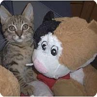 Adopt A Pet :: Sparkel - Orlando, FL
