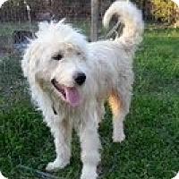 Adopt A Pet :: Fuzz - Brattleboro, VT