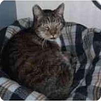 Adopt A Pet :: Snaggletooth - Hamburg, NY