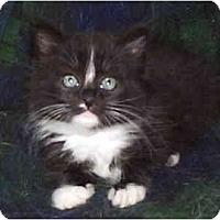 Adopt A Pet :: Charlotte - Davis, CA