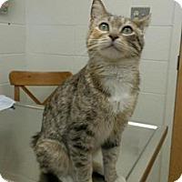 Adopt A Pet :: C.J. - Leesburg, FL