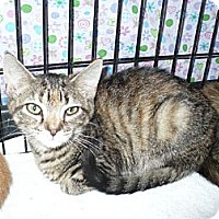 Adopt A Pet :: Avery - Colmar, PA