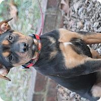 Adopt A Pet :: Tazi - Homewood, AL