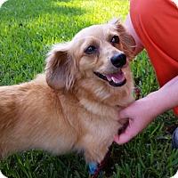 Adopt A Pet :: Topsy - Kingwood, TX