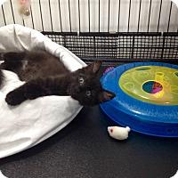 Adopt A Pet :: Max - Speonk, NY