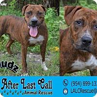 Adopt A Pet :: Spudz - Ft. Lauderdale, FL