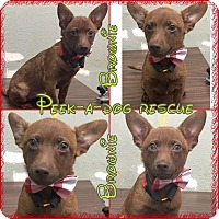 Adopt A Pet :: Brownie - South Gate, CA