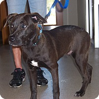 Adopt A Pet :: Colton - Myakka City, FL