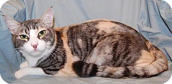 Calico Cat for adoption in Fullerton, California - Daisy