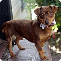 Adopt A Pet :: picasso - Dalton, GA