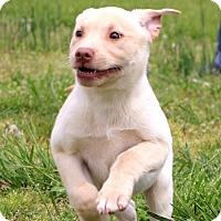 Adopt A Pet :: Letti~ meet me! - Glastonbury, CT
