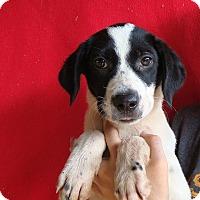 Adopt A Pet :: Angel - Oviedo, FL