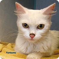 Adopt A Pet :: Fantasma - Oskaloosa, IA