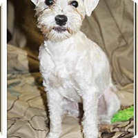 Adopt A Pet :: Olive - South Bend, IN