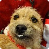 Adopt A Pet :: Robby - Vacaville, CA