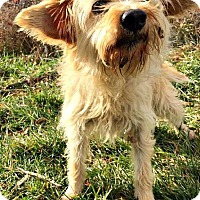 Terrier (Unknown Type, Small) Mix Dog for adoption in Kimberton, Pennsylvania - Trixie