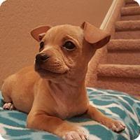 Adopt A Pet :: Lance - Evergreen, CO