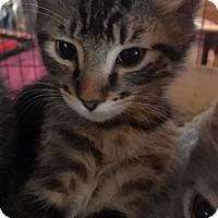 Adopt A Pet :: Kermit - Pasadena, CA