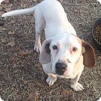 Adopt A Pet :: Peanut - Blanchard, OK