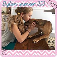 Adopt A Pet :: DYLAN SPENCER III - Brattleboro, VT