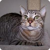 Adopt A Pet :: Rabbit - Colorado Springs, CO