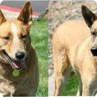 Adopt A Pet :: GYPSY & LADY - Gilbert, AZ