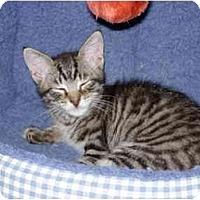 Adopt A Pet :: Yoda - Davis, CA