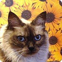 Adopt A Pet :: Willow - Albany, NY