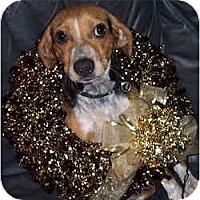 Adopt A Pet :: Kibbles - Novi, MI