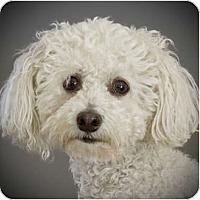 Adopt A Pet :: Lucas - La Costa, CA